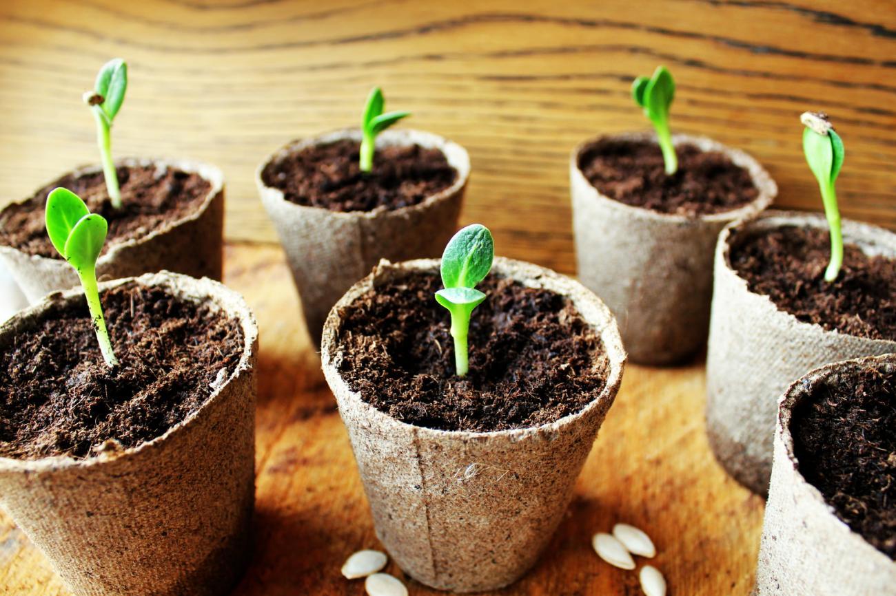 A vos semis